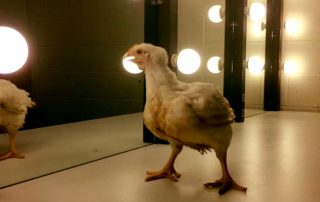 Chicken in Dressing Room